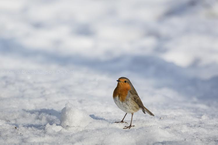 sneeuw als reflectiescherm karin