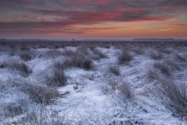 ochtendrood besneeuwd natuurgebied