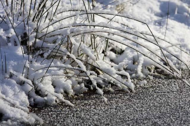 sneeuw op takken door karin