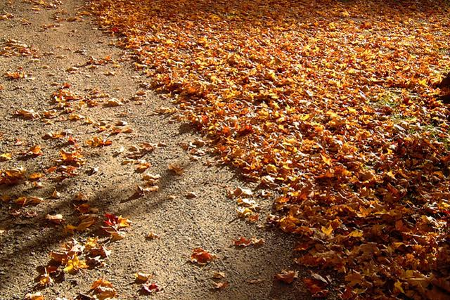 bladval-in-de-herfst