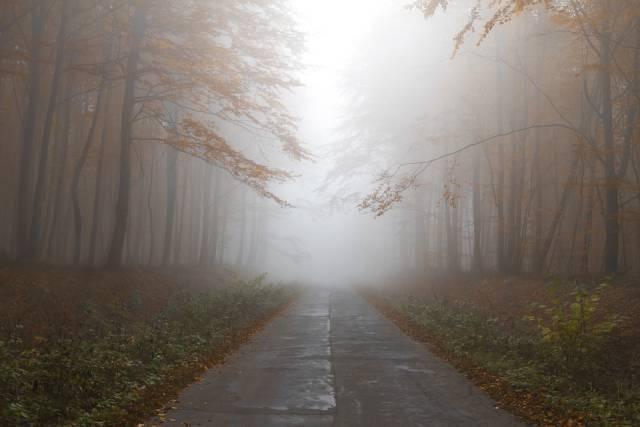 aanvriezende-mist-zorgt-voor-gladheid