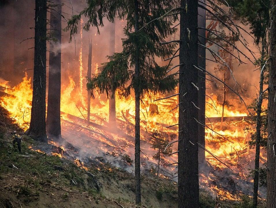 In Portugal kwamen ook bosbranden voor door de hitte.