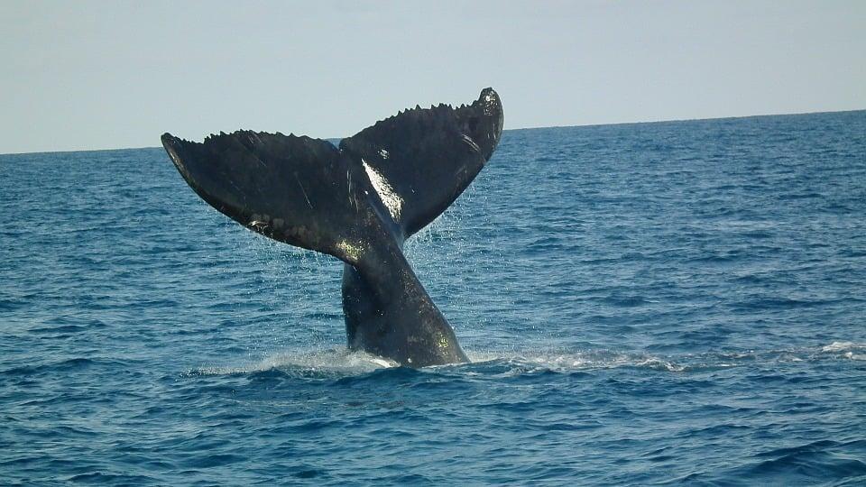 Walvissen in zee