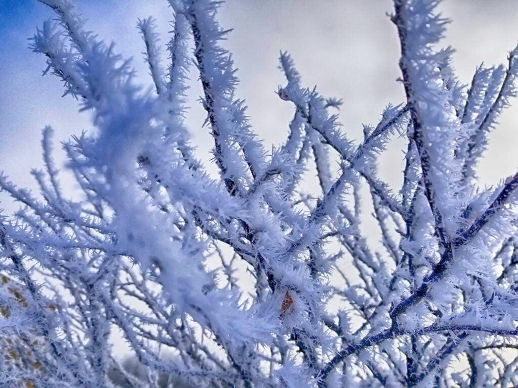 Diep bevroren takken (ijskristallen).